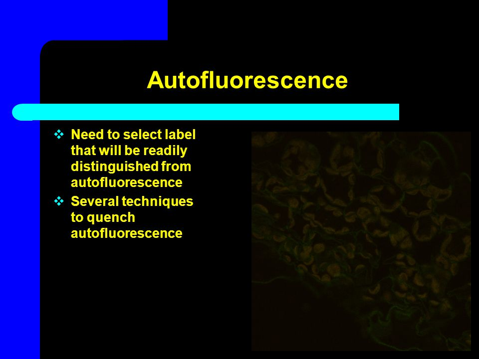 Autofluorescence Need to select label that will be readily distinguished from autofluorescence.