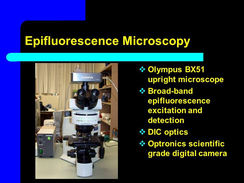 Epifluorescence Microscopy