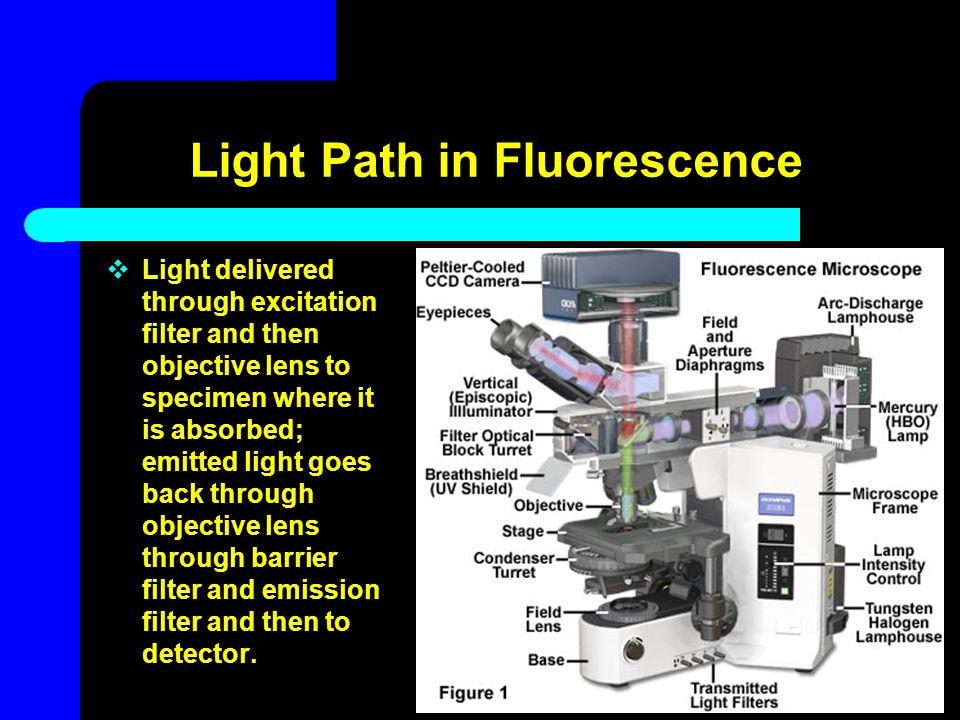 Light Path in Fluorescence