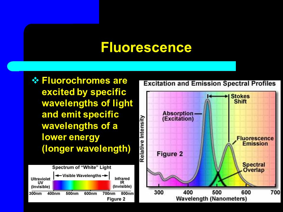 Fluorescence Fluorochromes are excited by specific wavelengths of light and emit specific wavelengths of a lower energy (longer wavelength)
