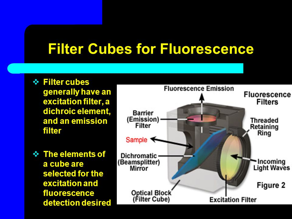 Filter Cubes for Fluorescence