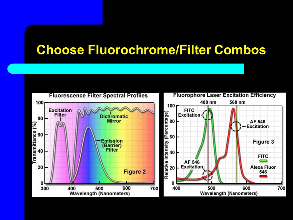 Choose Fluorochrome/Filter Combos