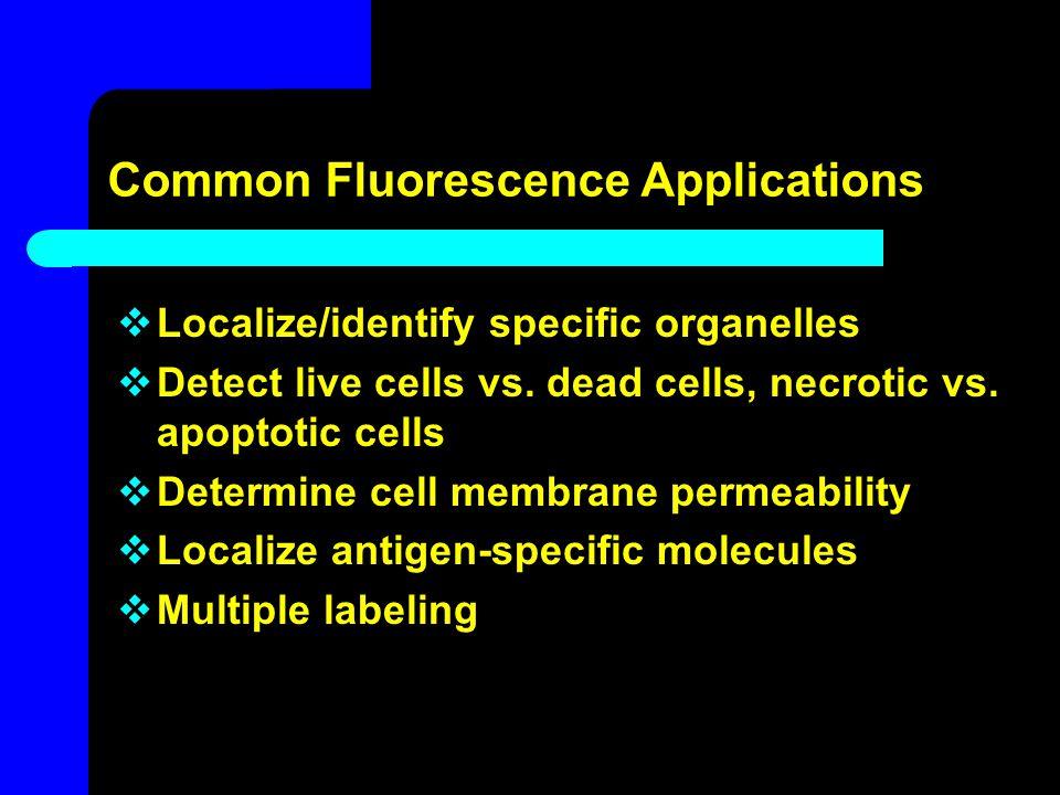 Common Fluorescence Applications