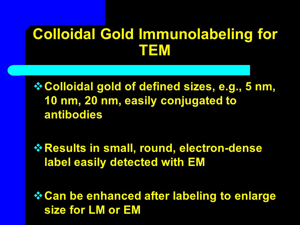 Colloidal Gold Immunolabeling for TEM