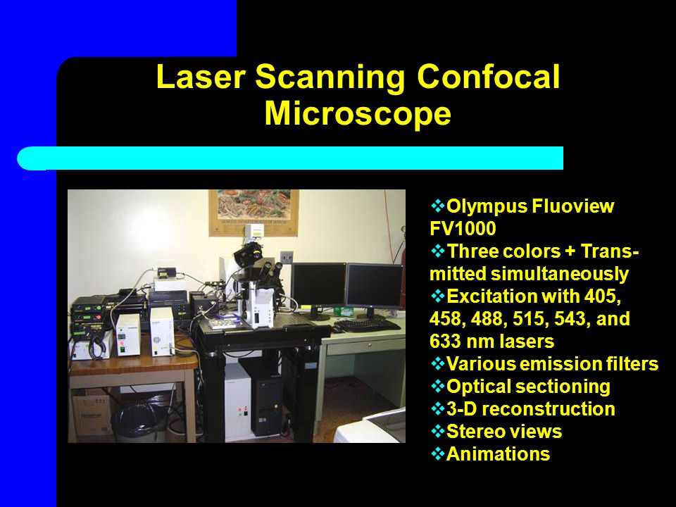 Laser Scanning Confocal Microscope