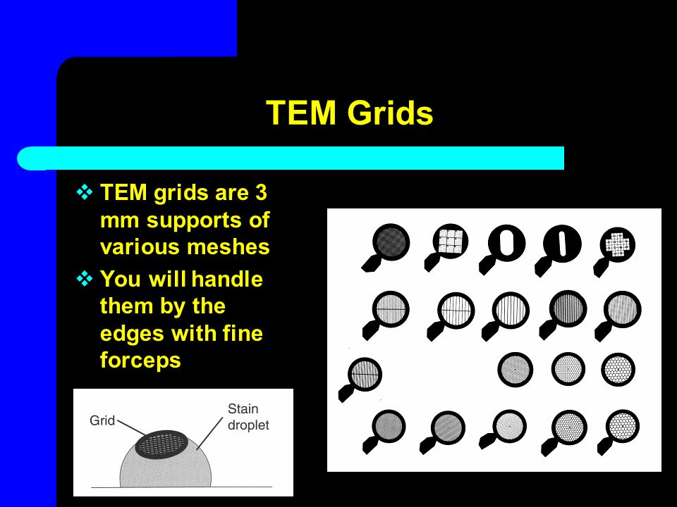 TEM Grids TEM grids are 3 mm supports of various meshes