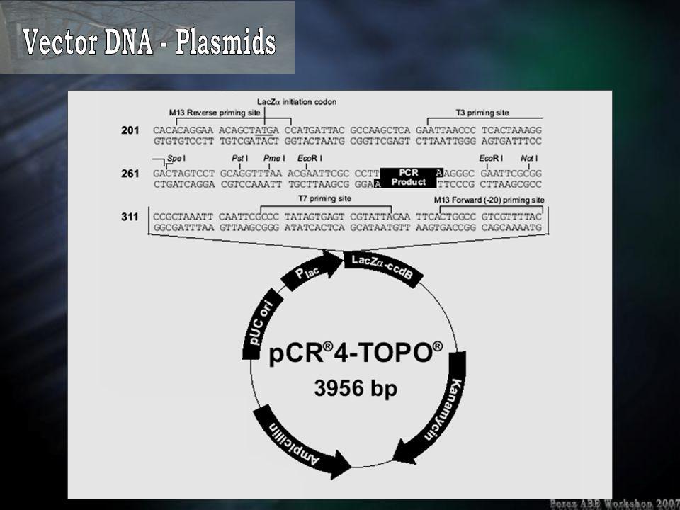 Vector DNA - Plasmids