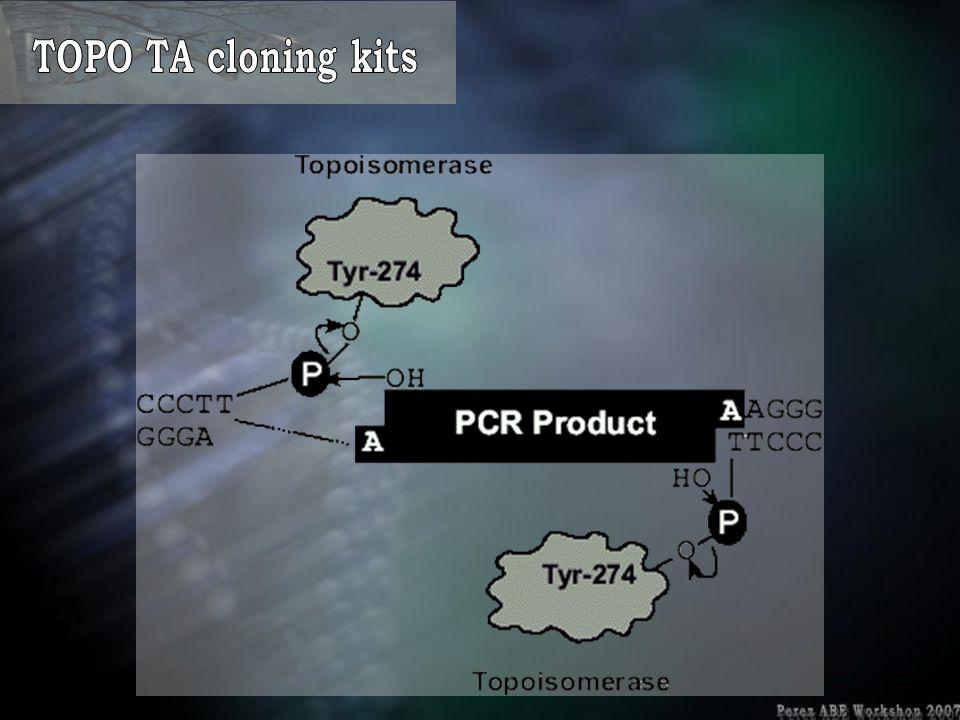 TOPO TA cloning kits