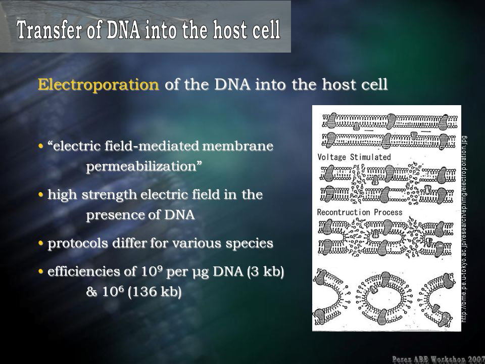 Transfer of DNA into the host cell