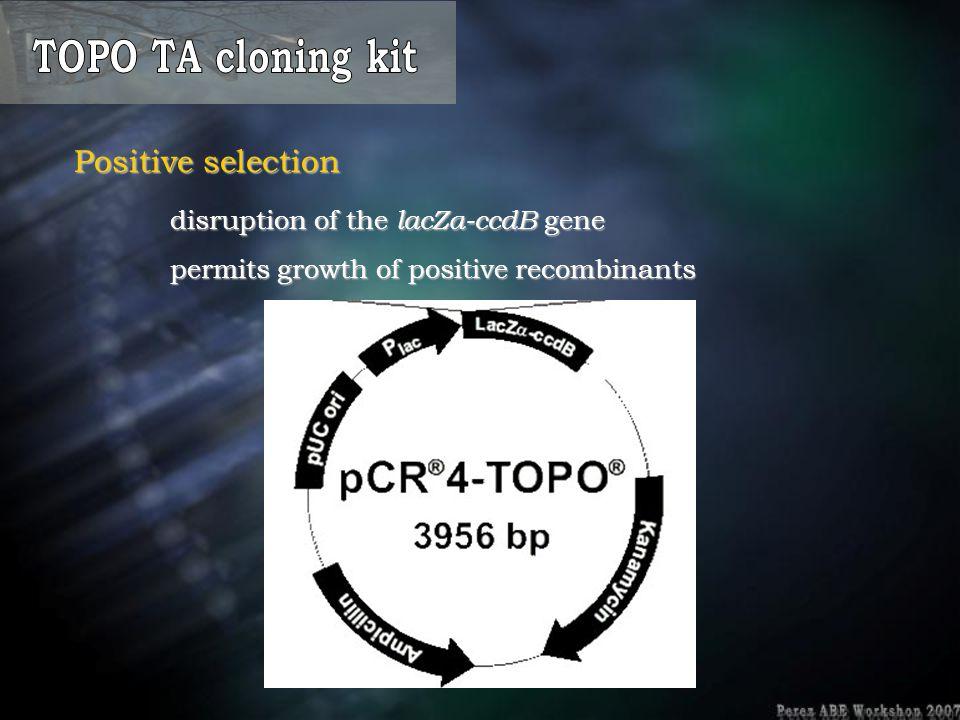 TOPO TA cloning kit Positive selection