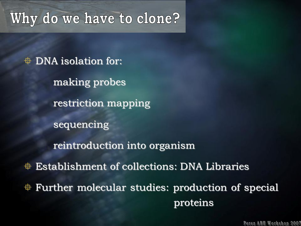 Why do we have to clone DNA isolation for: making probes