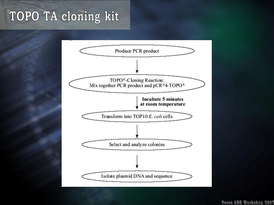 TOPO TA cloning kit