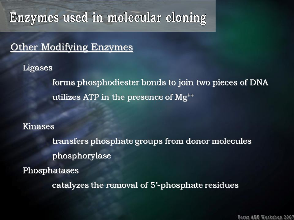 Enzymes used in molecular cloning
