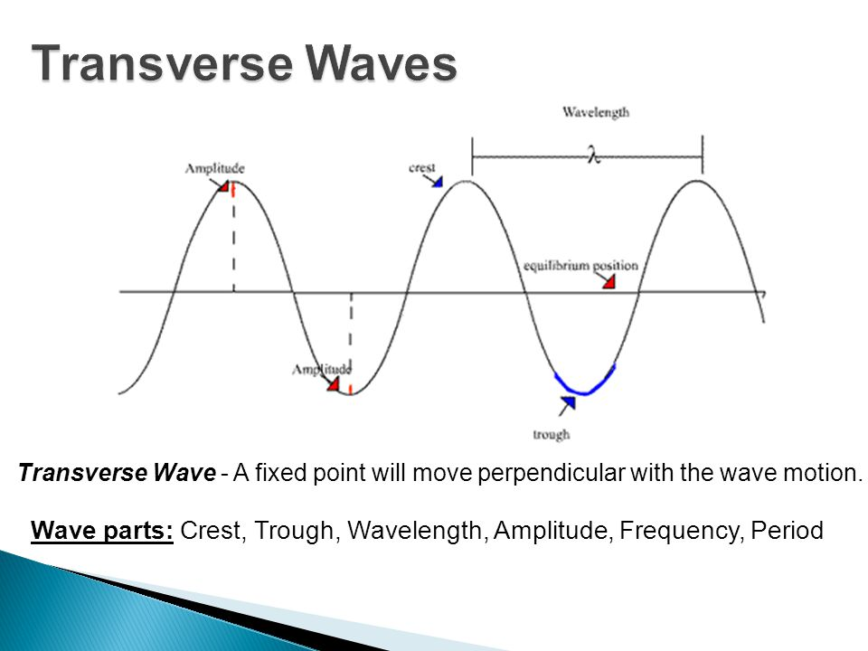 Transverse Waves Transverse Wave - A fixed point will move perpendicular with the wave motion.