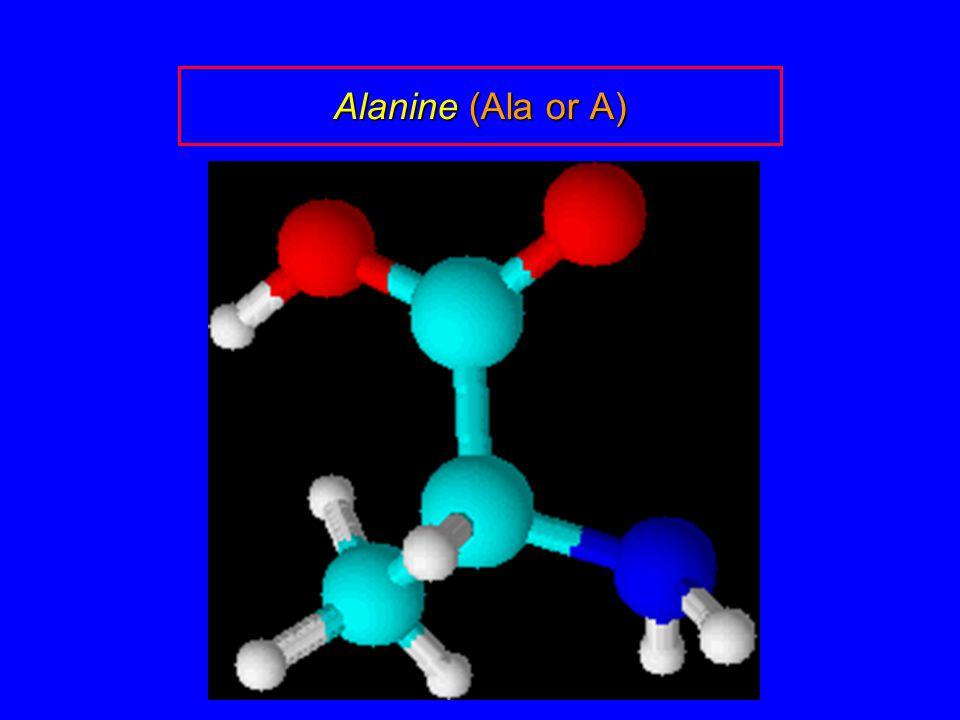 Alanine (Ala or A)