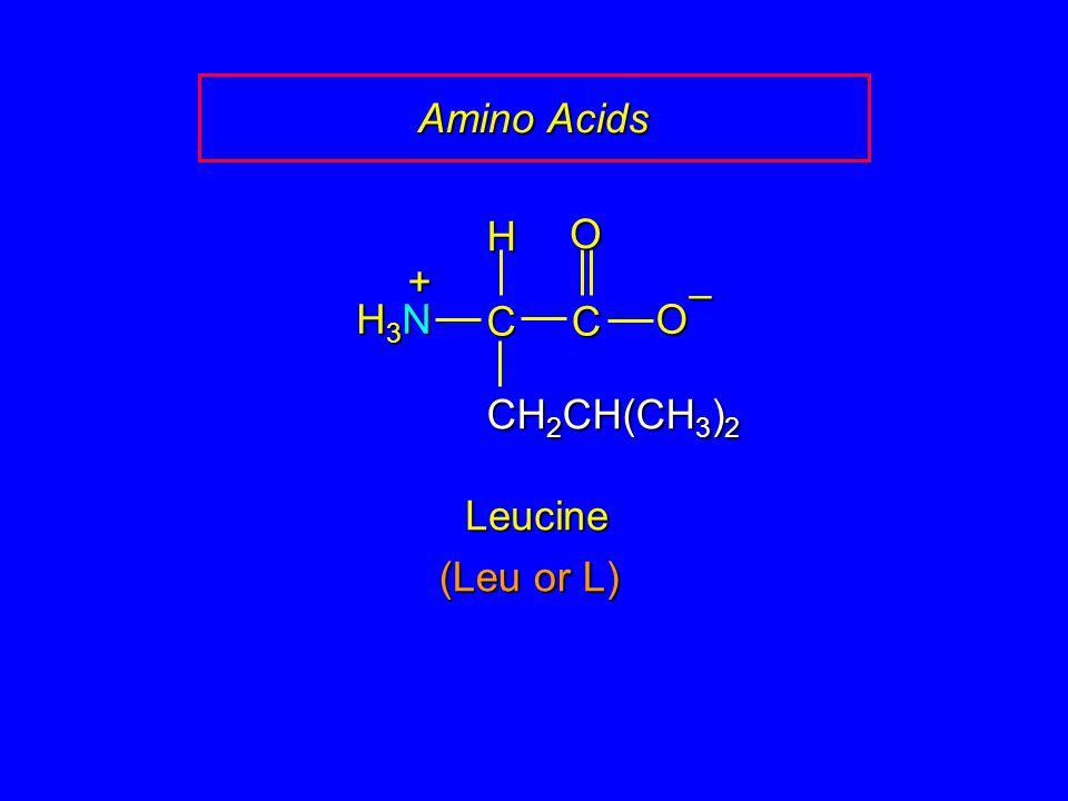 Amino Acids H O + – H3N C C O CH2CH(CH3)2 Leucine (Leu or L)