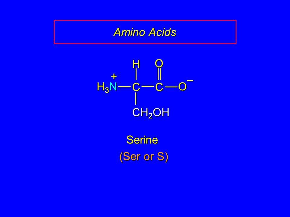Amino Acids H O + – H3N C C O CH2OH Serine (Ser or S)