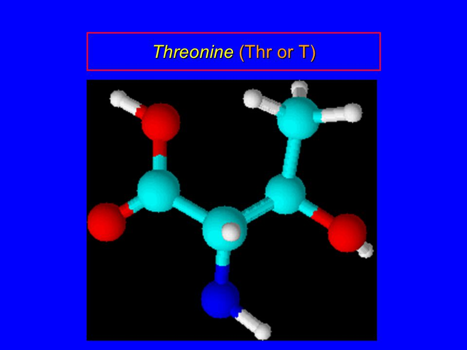 Threonine (Thr or T)
