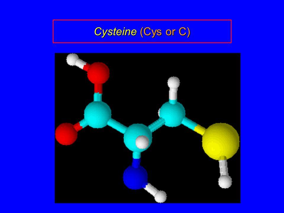 Cysteine (Cys or C)