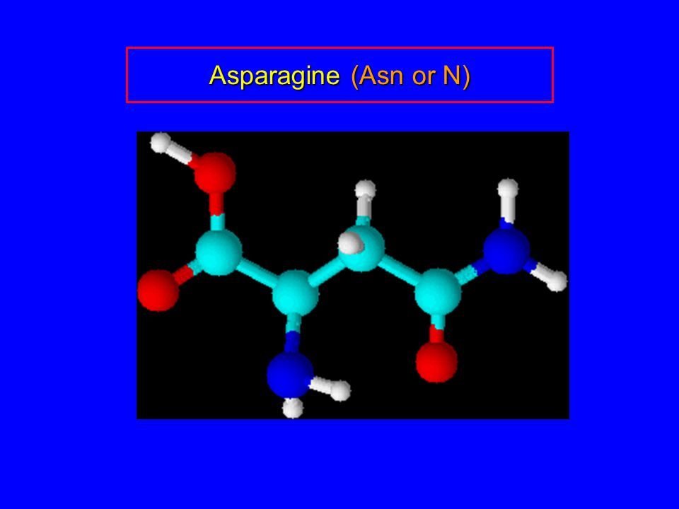 Asparagine (Asn or N)