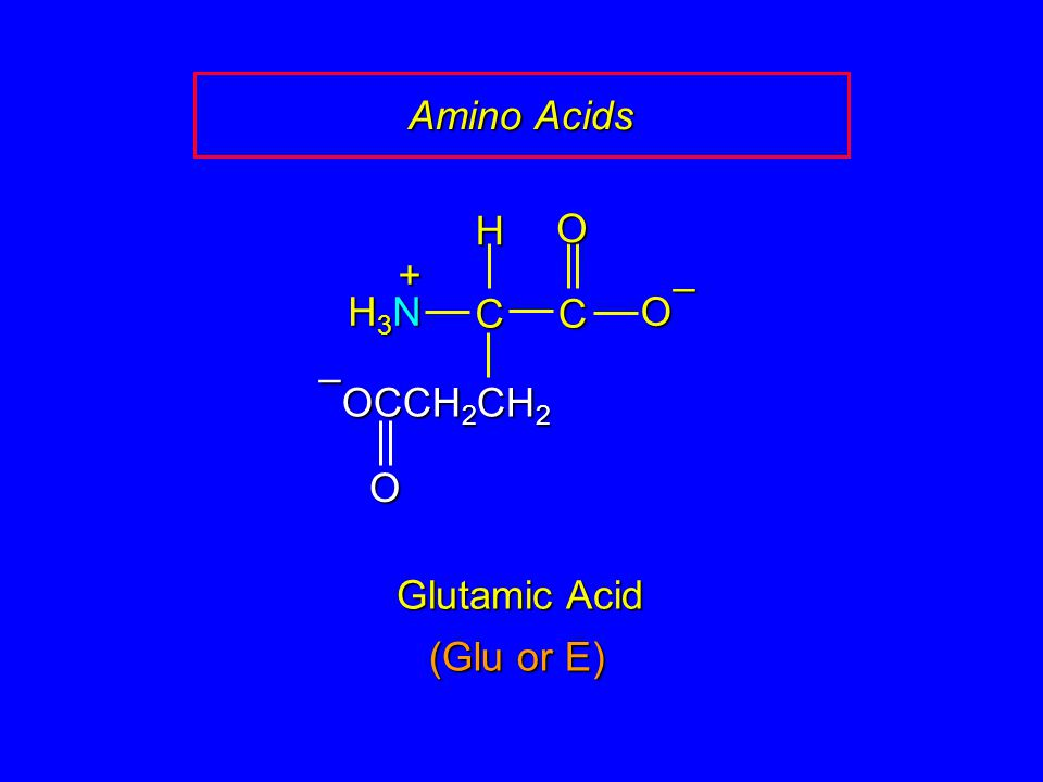 Amino Acids C O – H H3N + OCCH2CH2 Glutamic Acid (Glu or E)