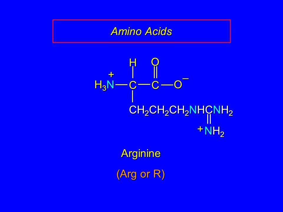 Amino Acids H O + – H3N C C O CH2CH2CH2NHCNH2 + NH2 Arginine (Arg or R)