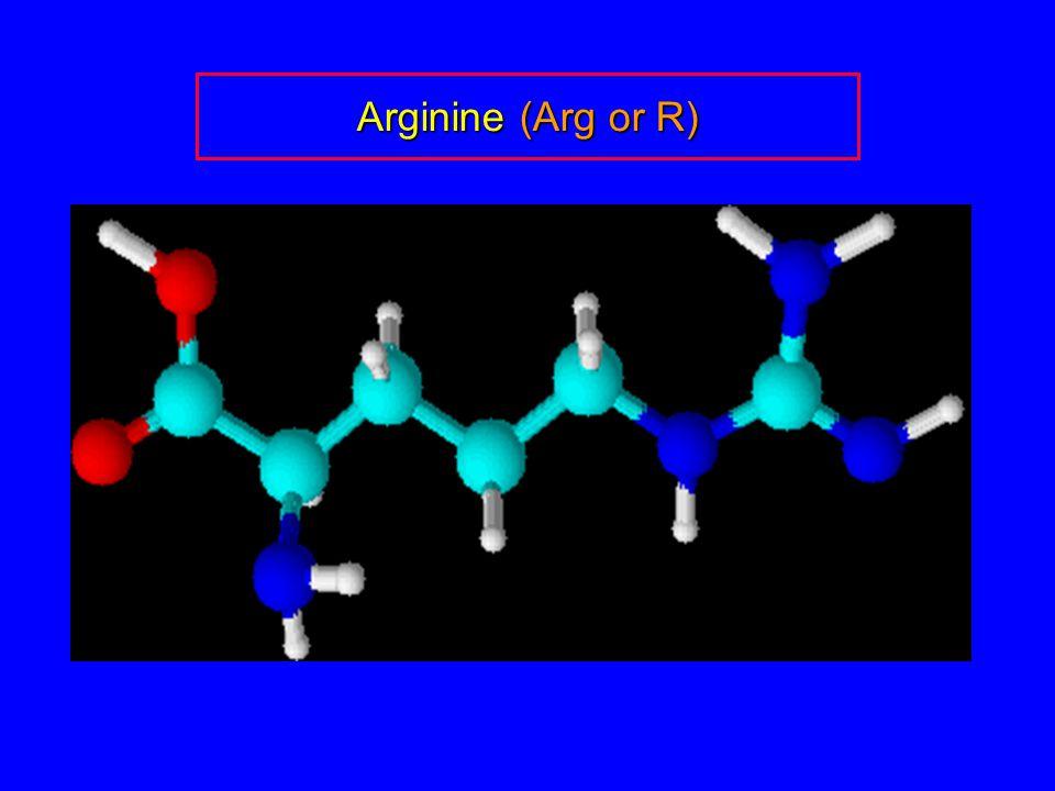 Arginine (Arg or R)