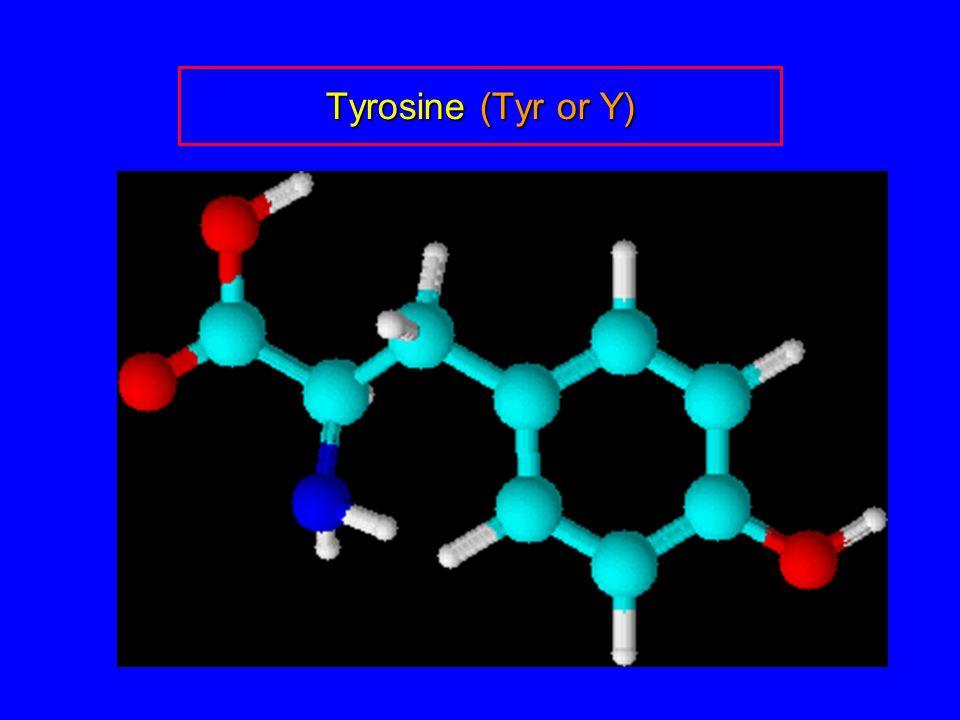 Tyrosine (Tyr or Y)