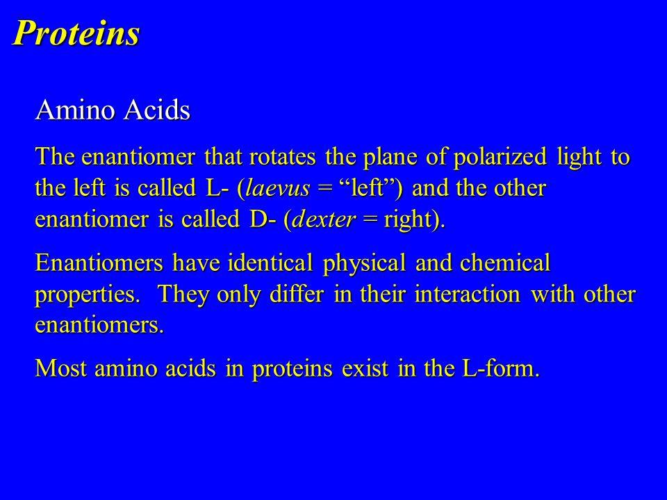 Proteins Amino Acids.