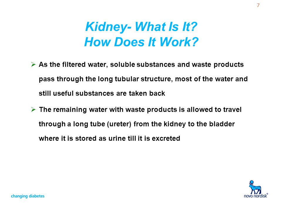 Kidney- What Is It How Does It Work