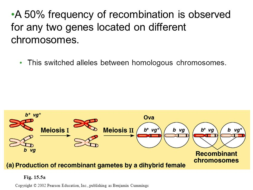 A 50% frequency of recombination is observed for any two genes located on different chromosomes.