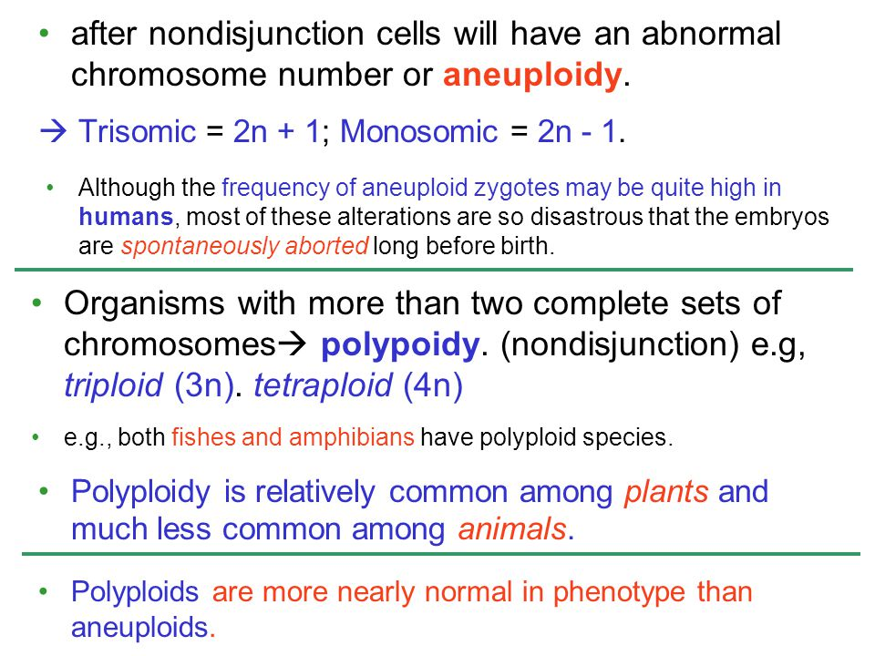 after nondisjunction cells will have an abnormal chromosome number or aneuploidy.