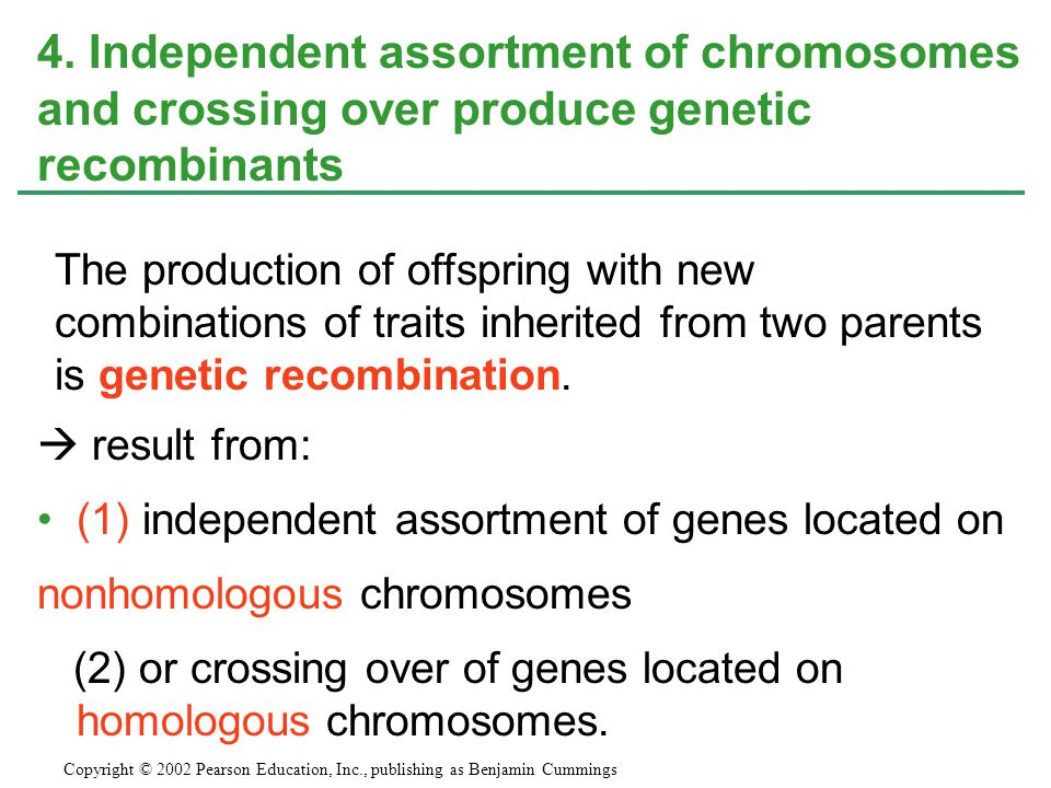 4. Independent assortment of chromosomes and crossing over produce genetic recombinants