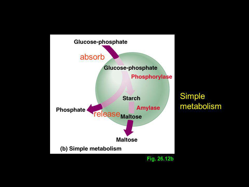 absorb Simple metabolism release Fig. 26.12b