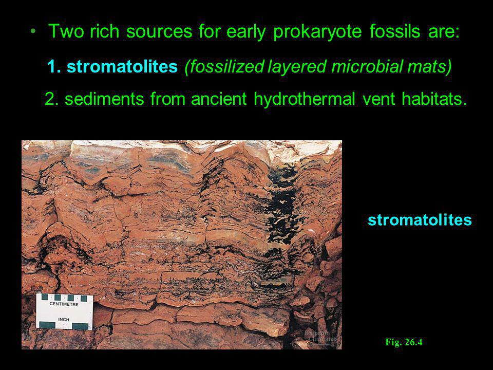 1. stromatolites (fossilized layered microbial mats)