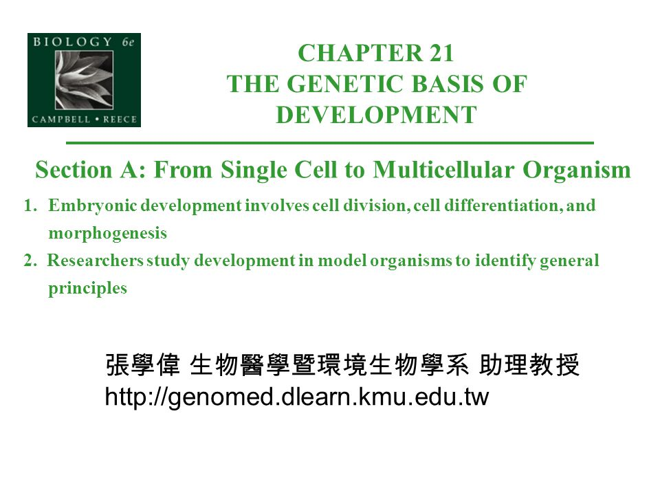CHAPTER 21 THE GENETIC BASIS OF DEVELOPMENT