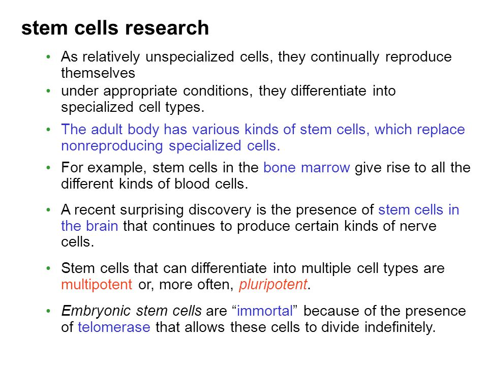 stem cells research As relatively unspecialized cells, they continually reproduce themselves.