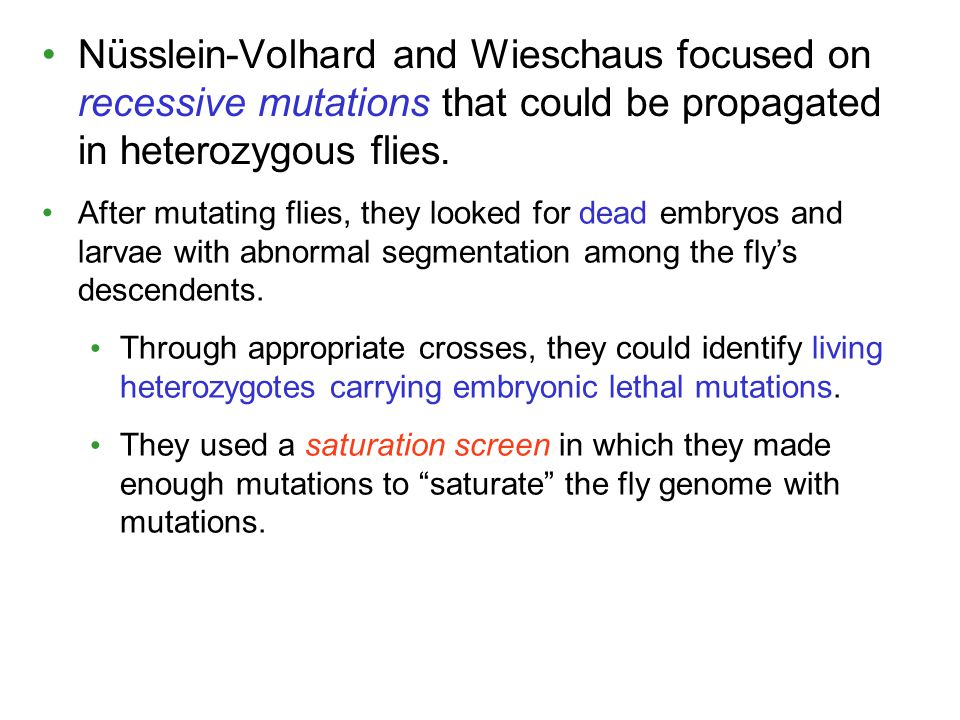 Nüsslein-Volhard and Wieschaus focused on recessive mutations that could be propagated in heterozygous flies.