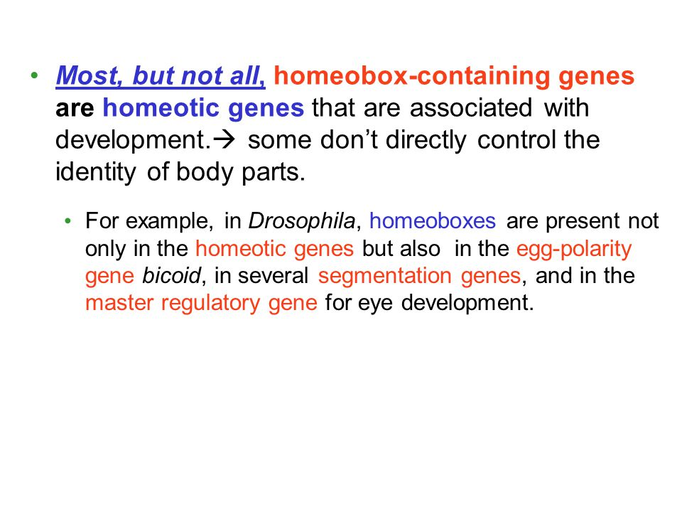 Most, but not all, homeobox-containing genes are homeotic genes that are associated with development. some don't directly control the identity of body parts.