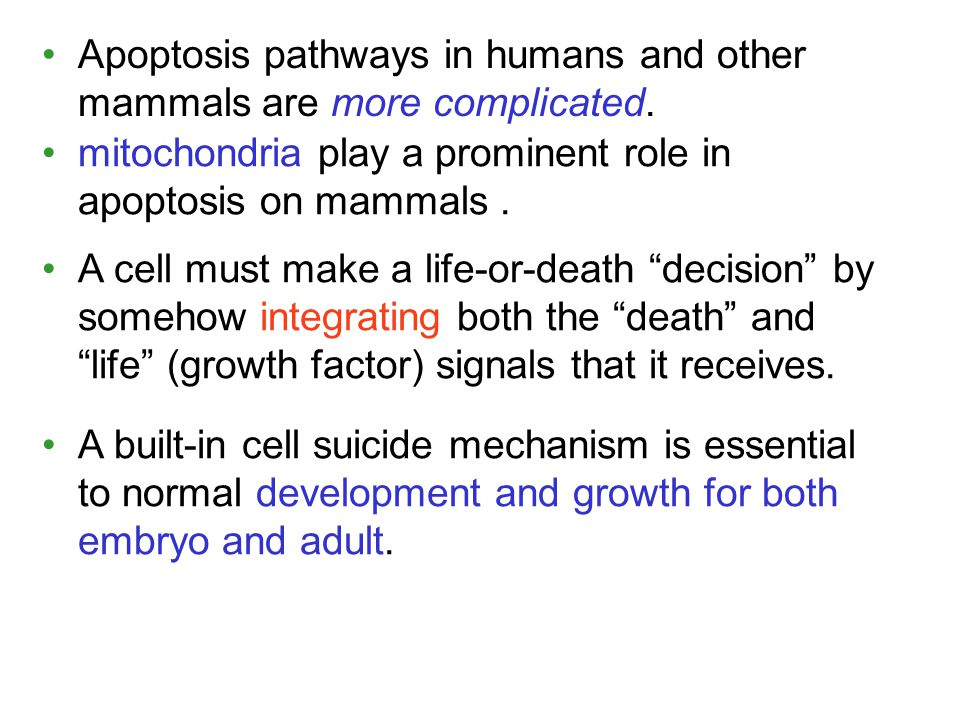 Apoptosis pathways in humans and other mammals are more complicated.