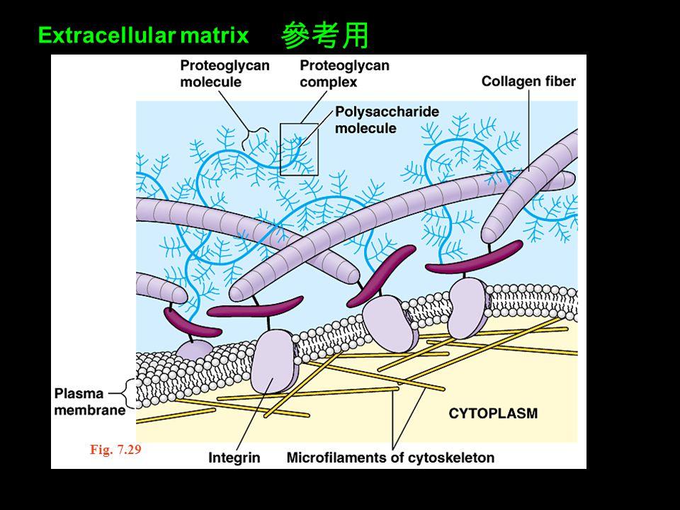 Extracellular matrix 參考用 Fig. 7.29