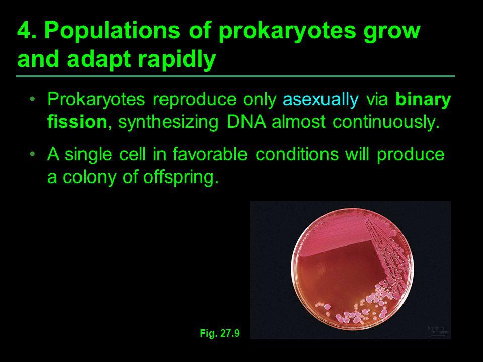 4. Populations of prokaryotes grow and adapt rapidly