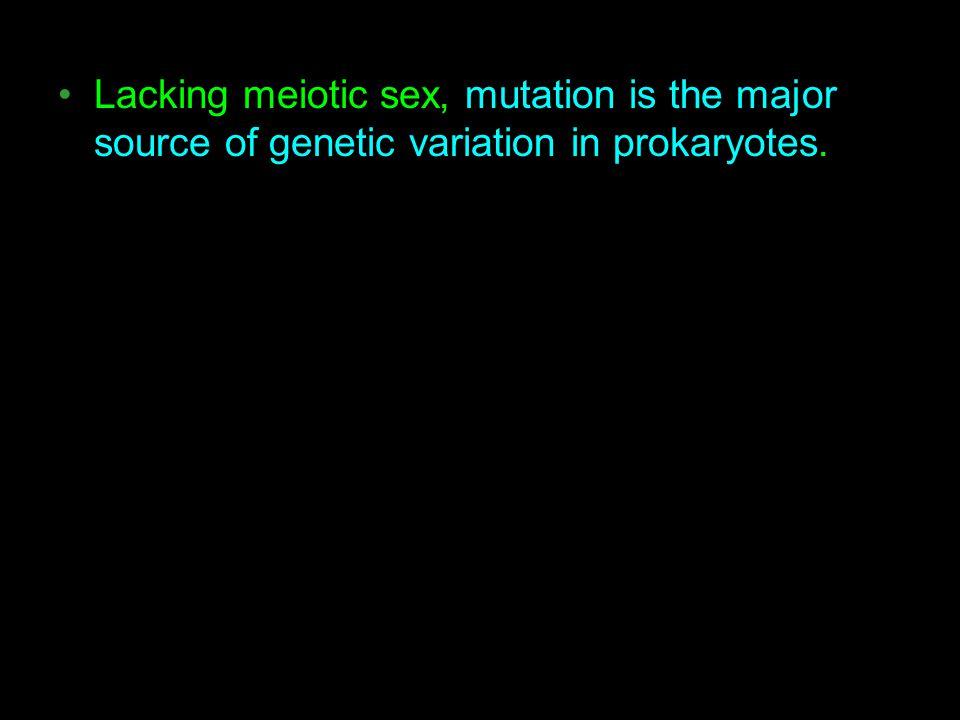 Lacking meiotic sex, mutation is the major source of genetic variation in prokaryotes.