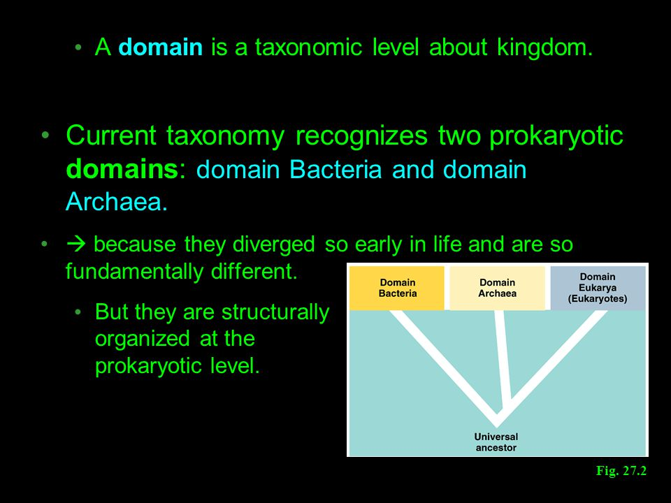 A domain is a taxonomic level about kingdom.