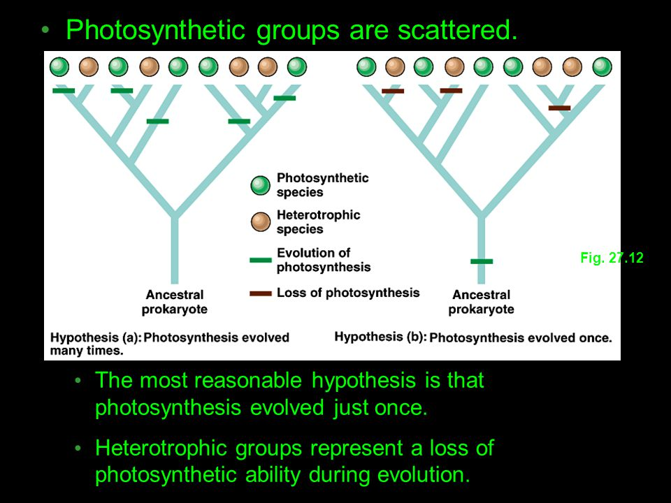 Photosynthetic groups are scattered.