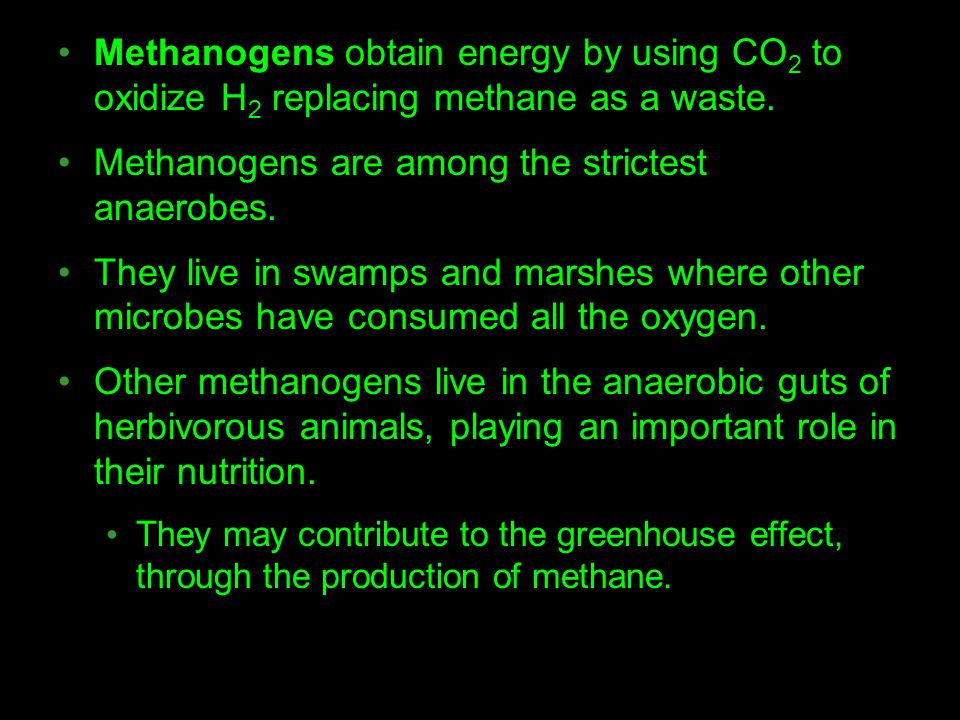 Methanogens are among the strictest anaerobes.