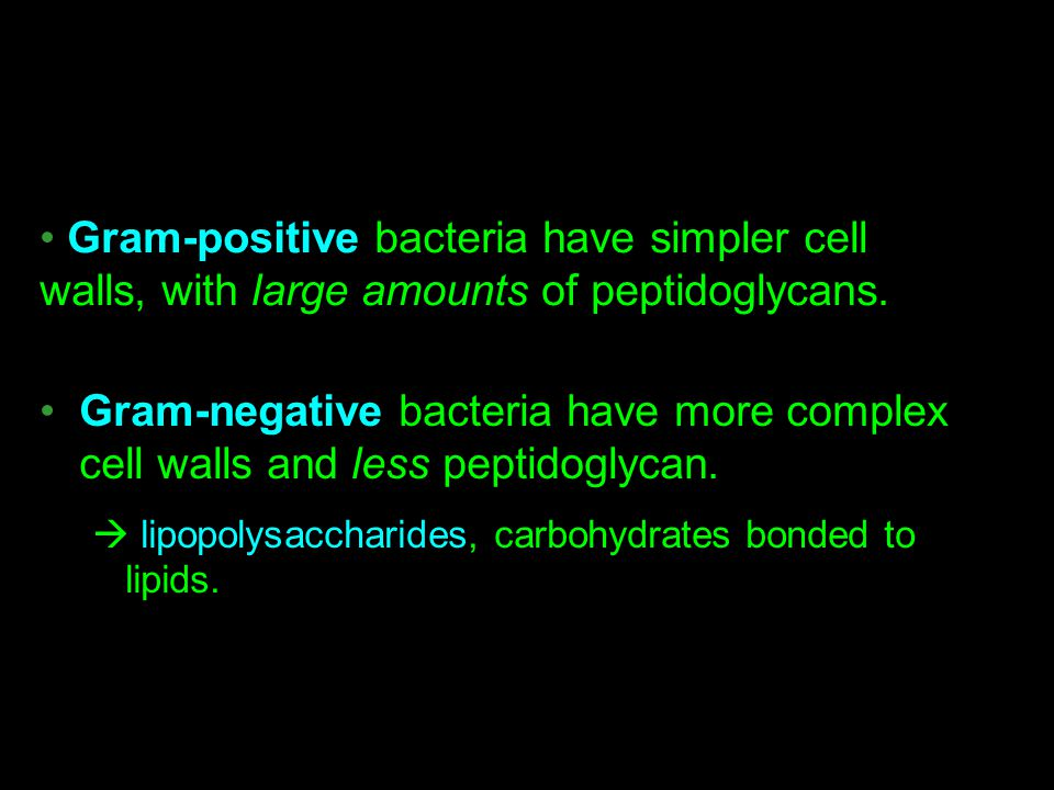 Gram-positive bacteria have simpler cell walls, with large amounts of peptidoglycans.