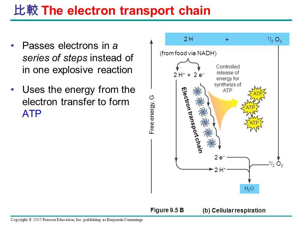 比較 The electron transport chain
