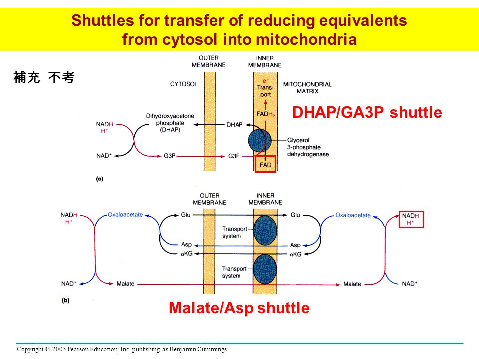 Shuttles for transfer of reducing equivalents