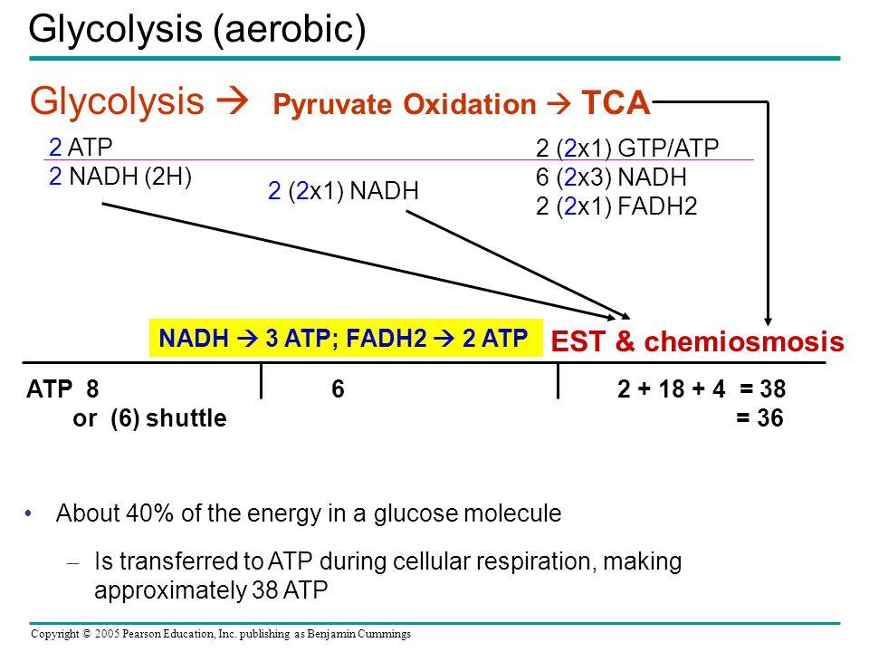 Glycolysis  Pyruvate Oxidation  TCA